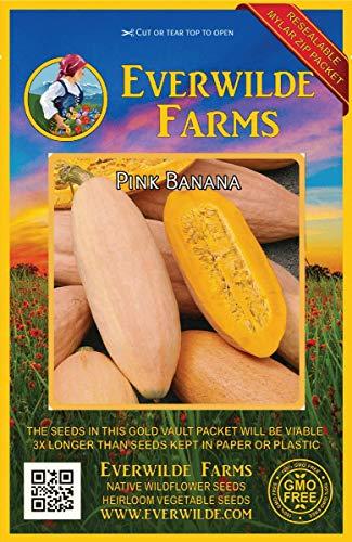 40 Pink Banana Winter Squash Seeds