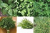 David's Garden Seeds Collection Set Herb Culinary (Multi) 6 Varieties...