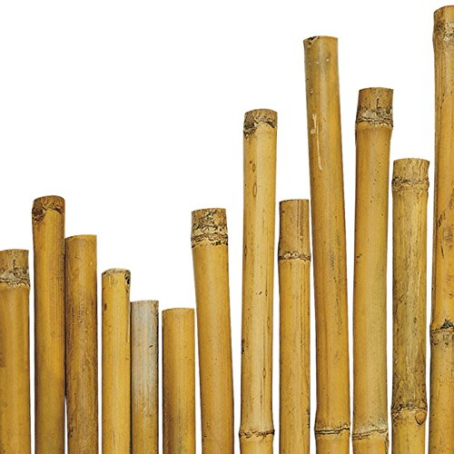 N ° 50 Bamboo Canes 210 cm x Ø 20 – 22 mm for Plants, Agriculture, Orto, Furniture, Structures, Decorations