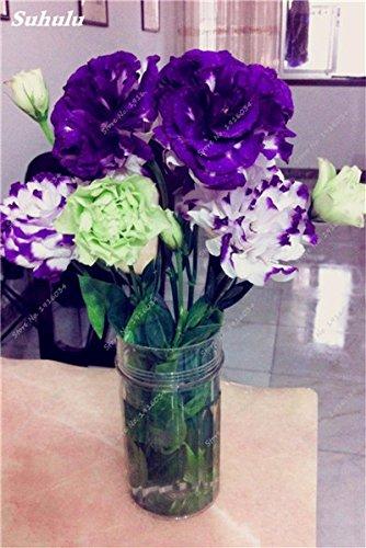 200 Pcs intérieur Bonsai Eustoma Graines vivaces plantes à fleurs Balcon Fleurs Graines Lisianthus en pot pour Flower Pot Planters 5