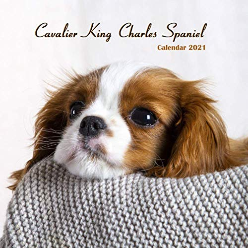 """Cavalier King Charles Spaniel Calendar 2021: Wall And Desk Calendar 2021, Size 8.5"""" x 17"""" When Open   UK and US Official Holidays   A Must Have For Puppies Lovers."""