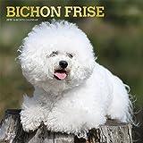Bichon Frisé - Gelockter Bichon 2019 - 18-Monatskalender mit freier DogDays-App (Wall-Kalender)