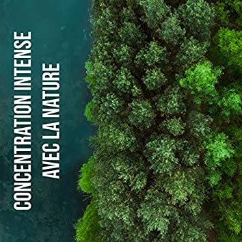 Concentration intense avec la nature (Musique New Age pour apprendre)