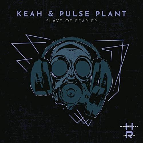 Keah & Pulse Plant