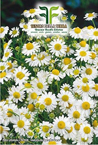100 Aprox. - Graines de camomille - Matricaria Chamomilla Dans emballage d'origine Made in Italy - Camomille