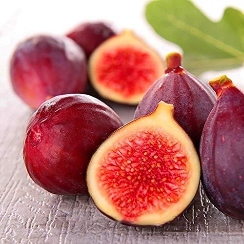 100 Pièces Sac Graines De Figues Délicieuses Graines De Fruits Tropicaux Violets Parfumés Pour L agriculture Facile à Cultiver Des Graines Graines de Figue