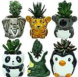 Matty's Garden Animal Ceramic Succulent Planters Set of 6 | 2.5 Inch Small Cactus Pots with Drainage Hole Penguin Koala Panda Tiger Elephant Crocodile