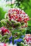 bloom green co. saldi! 100 pezzi arcobaleno tulip bonsai fiore pianta perenne giardino della casa bonsai pianta in vaso semillars de flores purificare l'aria: 5