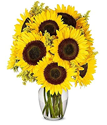 Flowers - Stunning Sunflowers - Premium (Free Vase Included) from From You Flowers