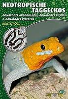 Neotropische Taggeckos: Gonatodes albogularis, Gonatodes fuscus & Gonatodes vittatus