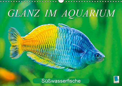 Glanz im Aquarium: Süßwasserfische (Wandkalender 2019 DIN A3 quer): Aquarium: Prachtregenbogenfisch, Marmorskalar & Co. (Monatskalender, 14 Seiten ) (CALVENDO Tiere)