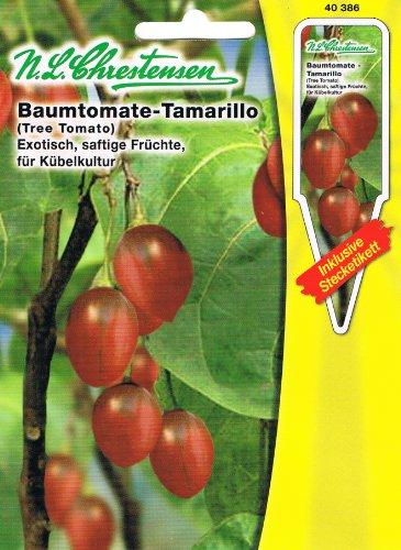 Baumtomate 'Tamarillo' exotisch, saftige Früchte, für Kübelkultur geeignet