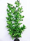 WANGSHAOFENG Planta de Acuario Green Brillantes Decoración del Tanque de Peces Planta Acuario (Size : 50cm Tall)