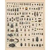 Meishe Art Poster Kunstdrucke Plakatdruck Insekten