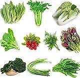 Semi di ortaggi Set 10-B Varietà Kit con oltre 8000 semi per insalata Miscela di semi di ortaggi cimelio naturale al 100% naturale per piantare indoor outdoor