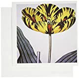 3dRose Greeting Cards, 6 x 6 Inches, Pack of 12, English Botanists 1700S Painting of Tiger Lily (gc_128747_2)