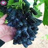 plantas 50pcs / semillas de uva dedo raras bolso, semillas de frutas, uvas avanzadas de crecimiento natural bonsai deliciosas potted para el jardín de 3