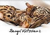 Bengal Kätzchen 2 (Wandkalender 2020 DIN A3 quer): Bengal Kitten für das ganze Jahr (Monatskalender, 14 Seiten ) (CALVENDO Tiere)