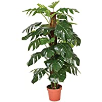 Catral 74010020 Planta artificial Monstera, 22.0x22.0x145.0 cm