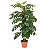 Catral 74010020 Planta artificial Monstera, 22.0x22.0x135.0 cm