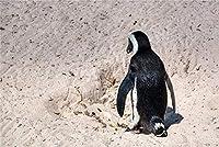 クロスステッチ 大人のためのクロスステッチキット ビーチの小さなペンギン 40x50cm 11CT番号別刺繍キット手作りキットパンチ針刺繍DIY初心者向け手作りスターターキット
