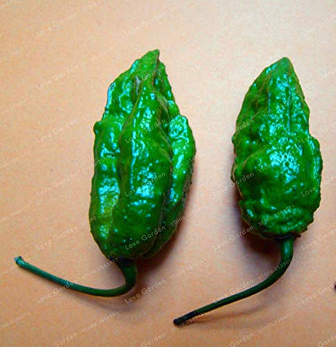 Shopvise de piment de semences de légumes 100 unités; couleur 10
