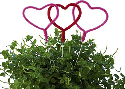 amscan - 552064-5 Piques avec Cœur Amour