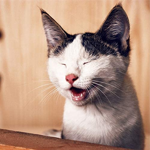Music for Cats Project, Jazz Music Therapy For Cats & Music for Resting Cats