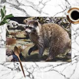 ZHANG Shirt Home Placemats Set of 6,Raccoon Hunting Eating Tide Pools Animals Wildlife Heat-Resistant Placemats Washable Table Mats for Kitchen Dining Table 12X18 Inch