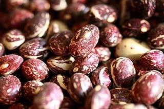 Vegetable Seeds - 50 Seeds of Good Mother Stallard Pole Bean Seeds - Heirloom