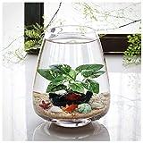 Tanque de cristal para peces y tortugas, mini ecosistema acuapónico, con arena de vidrio, concha y simulación de plantas de agua, para decoración de mesa de té de oficina