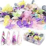 Vanchief 100 Pcs 3D Colorful Dried Flowers,...