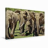 CALVENDO Lienzo de 75 cm x 50 cm Horizontal, un Motivo del Calendario de Elefantes Wildlife en Kenia, Imagen sobre Bastidor, Imagen Lista para Usar Animal Animales