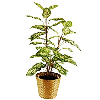 LCG Florals 16TFP21V Dieffenbachia Floor Plant In A Basket with Faux Dirt, 48  ,,