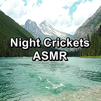Night Crickets ASMR