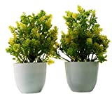 PUHUHP Artificial Beautiful Cute Mini Flower Plants with Pot Green Leaf Color Yellow Flower Shrubs for Home Decor, Washroom and Office Decor Christmas Diwali and Festive Decoration Pack of Two