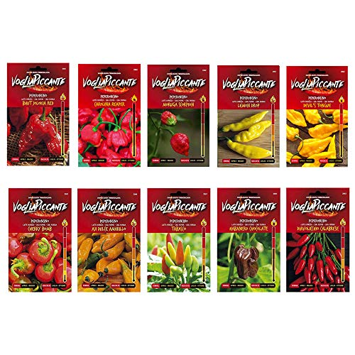 Kit 10 gemischte Sachets Chilli-Samen - Bhut Jolokia Red,Carolina Reaper,Moruga Scorpion,Lemon Drop,Devil\'s Tongue,Cherry Bomb,Aji Dulce Amarillo,Tabasco,Habanero Chocolate,Diavolicchio Calabrese