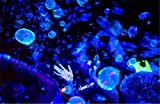 Tekno Bubbles Tekno TB350B Glowing Bubble Fluid-Blue (Half Gal) Bubble Machine Fluid
