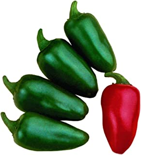 Park Seed Fresh Jalapeno M Hot Pepper Seeds, 25 Seeds in a Pack