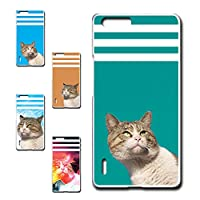 Huawei honor6 Plus 専用 スマホケース ハードケース カバー 猫柄 ネコ ひなたぼっこ中 【デザインC/グリーン】 緑色 TK-630C オーナー シックス ファーウェイ
