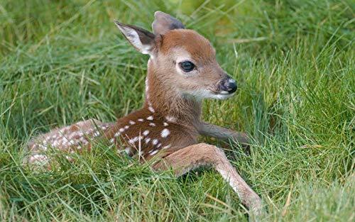 Adultos Niños Puzzle 1000 Piezas Pequeño ciervo sika en la hierba Diy Clásico Madera Toys Regalo