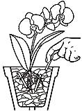 Orchideendünger Test