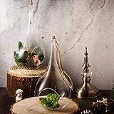 """Efavormart 2 Pack 12"""" Teardrop Hanging Glass Terrarium with Rope Air Plant Terrarium Succulent Planter DIY Terrarium"""