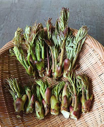 たらの芽 1kg 天然山菜 タラの芽 山菜 飛騨高山産 (岐阜県高山市)