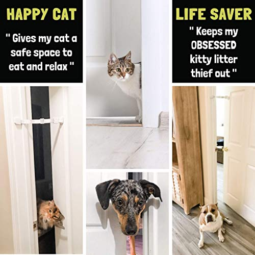 keep dogs out and allow cats in
