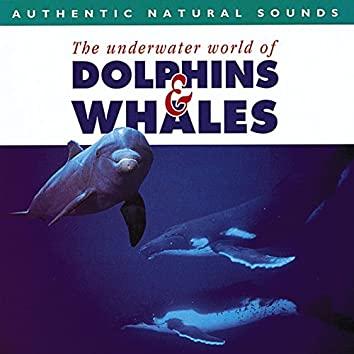 Authentic Natural Sounds: The Underwater World of Dolphins & Whales