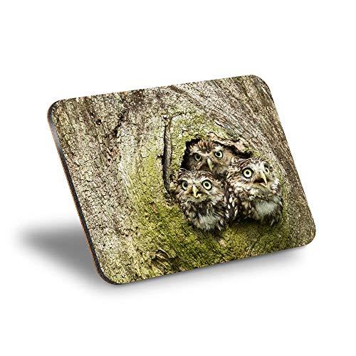 Destination Vinyl ltd Mantel individual de corcho 290 x 215 – búho polluelos bebé pájaro lindo lugar de trabajo silvestre alfombra de mesa/limpiable/impermeable #45962