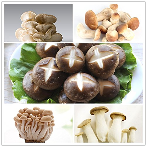 Tout neuf! 100pcs / sac champignons Graines drôle Succlent plantes végétales comestibles de santé 25 types de champignons Graines de Happy Farm