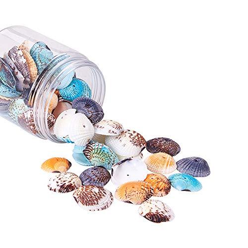 PandaHall 85 Piezas Conchas de Conchas en Espiral Colgantes Encantos con Agujeros para Manualidades, decoración del hogar, Fiesta en la Playa, pecera y Rellenos de jarrones (Color Mezclado)