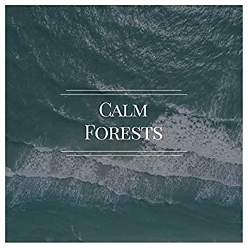 Calm Forests, Vol. 6